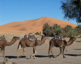 private 5 days Marrakech desert travel,5 days adventure Marrakech trip to Sahara